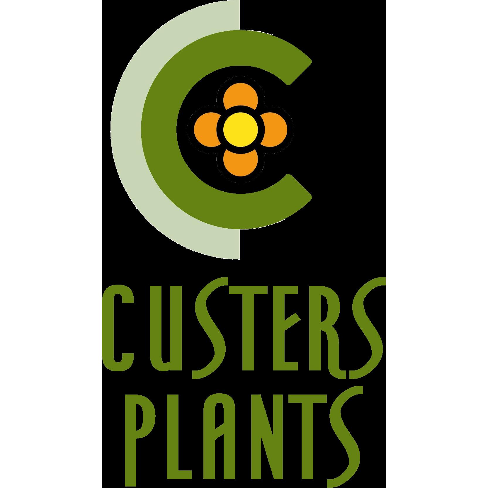 Custers Plants